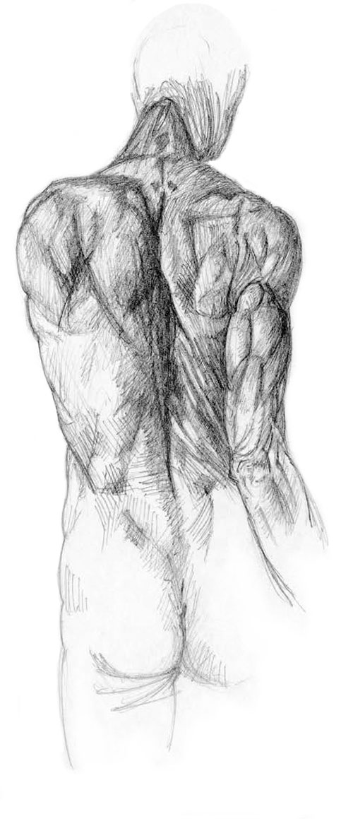 Sketches_anatomy_back_500