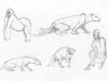 Animals&Playgym_i