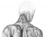 Sketches_anatomy_back_500