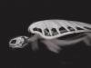 ipad_Skeletons_Evolution_turtle_600