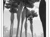 VisualThoughts_4_VaraderoTrees_600
